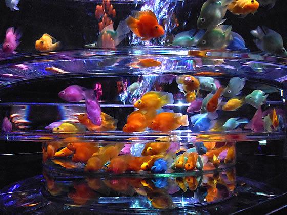 金魚とアートが融合したアートアクアリウム展