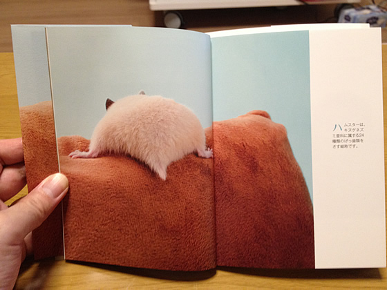ハムケツの本