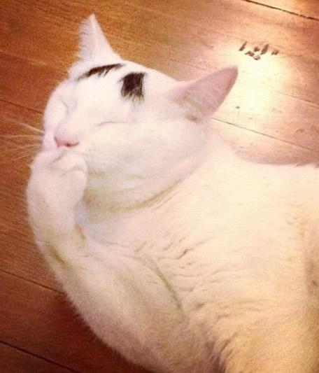 日銀の白川総裁と困り顔の猫のサムが激似